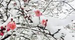 梅の里に雪景色